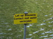 Blauwalg in de Berkelse wateren